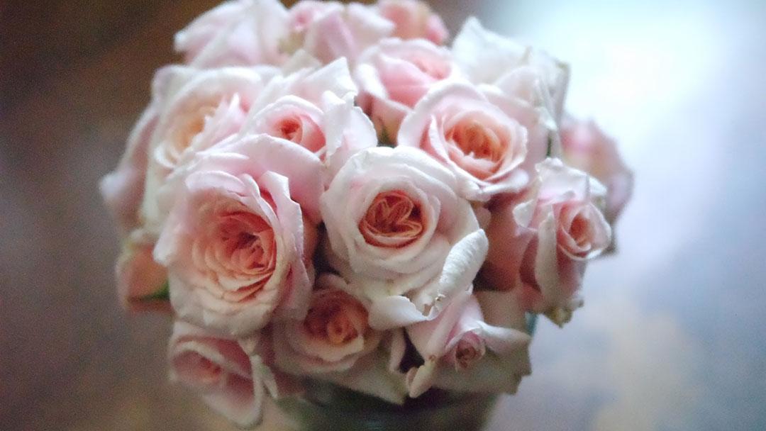 rosas-teresinha